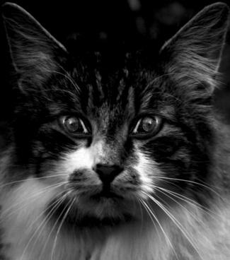 cats eyes cat