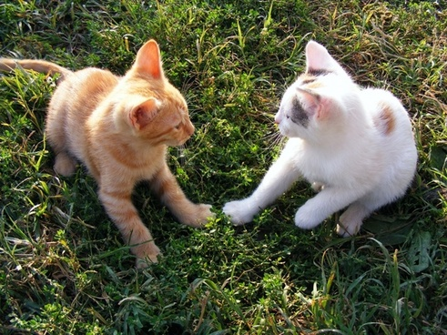 cats funny kittens