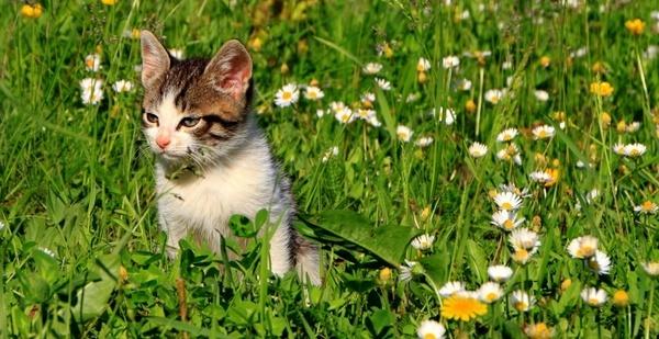 cats garden grass