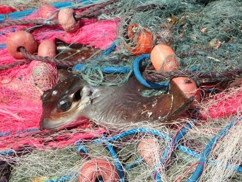 caught network fishing net