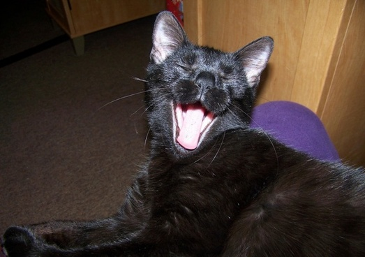 caught ya yawning