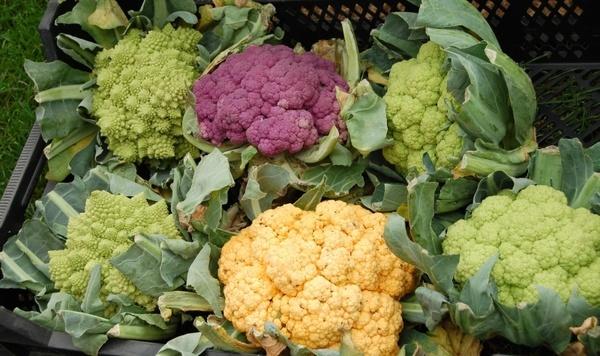 cauliflower vegetables colorful