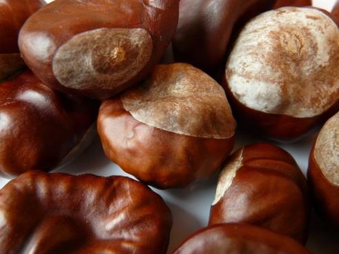 chestnut nut brown