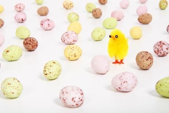 chicken celebration colored