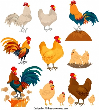 chicken icons collection colorful cartoon characters design