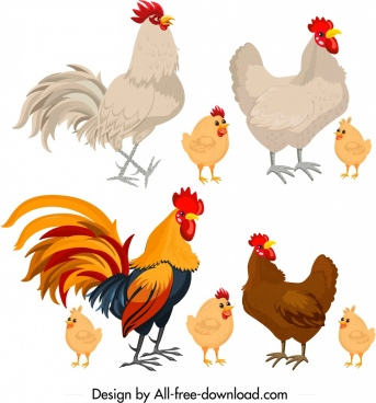 chicken icons colored cartoon design