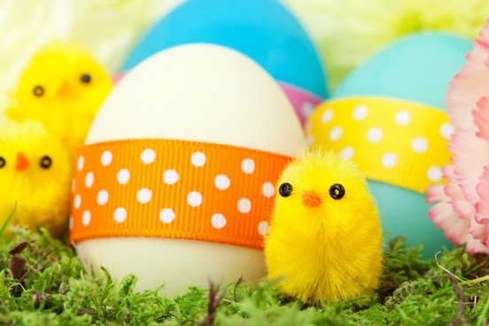 chicks and easter eggs