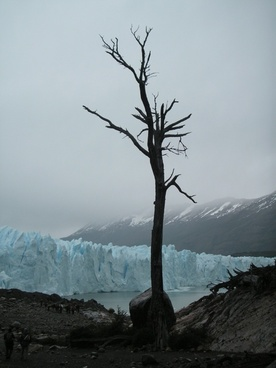 chile glacier dead tree
