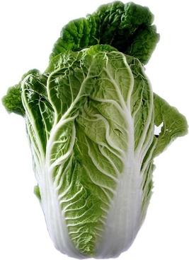 chinese cabbage salad leaf lettuce