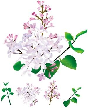 chinese herbal medicine cloves original vector