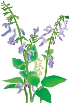 chinese herbal medicine danxiong vector