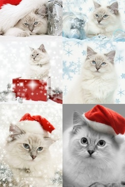 christmas hats and cats highdefinition picture
