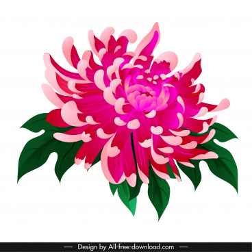 chrysanthemum flora icon classical colored design