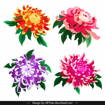 chrysanthemum petals icons colorful blooming sketch classical design