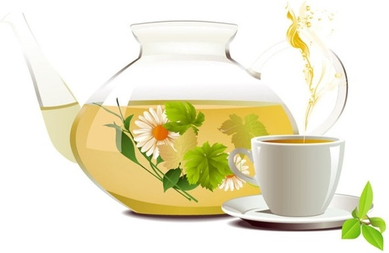chrysanthemum tea tea 01 vector
