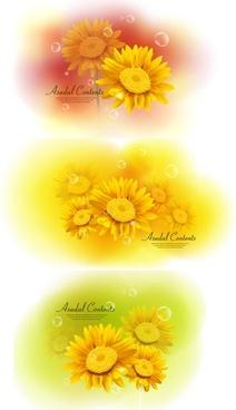 chrysanthemum vector dream
