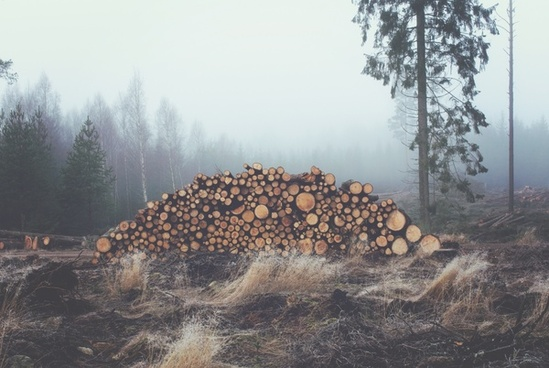 circle field fog forest log rural stack timber