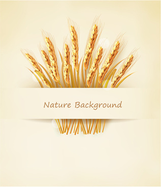 classic gold wheat background vector