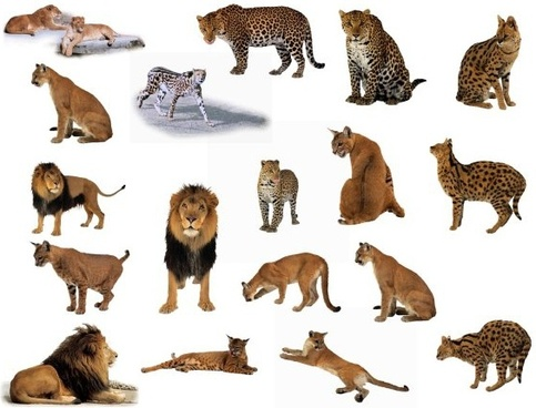 classic lion and leopard animal fig