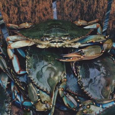 claw crab crustacean fine art fish food forest