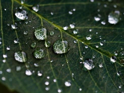 clear dew dewy drop droplet environment foliage