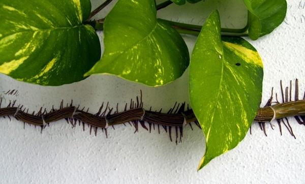 climbing plant white wall