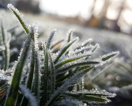 close closeup cold dew dof drop flower focus frost