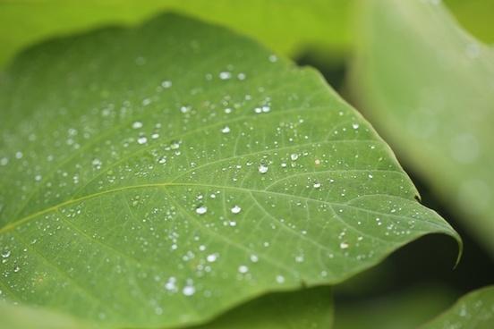 close closeup dew dof drop droplet foliage