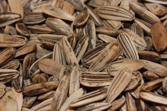close sunflower seeds eat