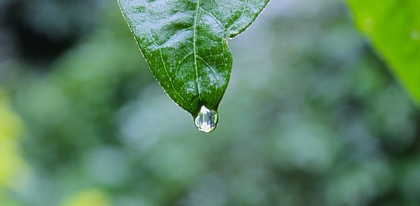 close up drop droplet leaf nature rain water wet