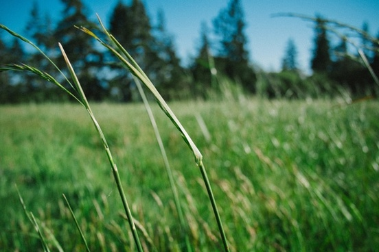 close up field forest grass nature