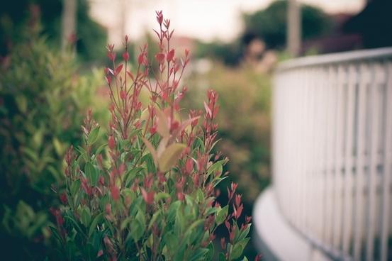 close up flower garden leaf nature plant