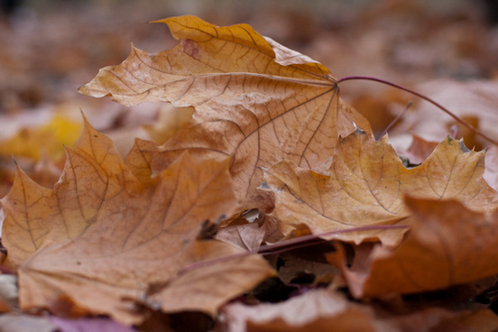 close up of autumn leaves fallen to the ground