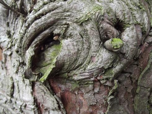 close up tree trunk
