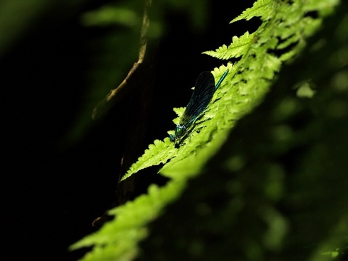 closeup dew dof drop fern flora focus forest
