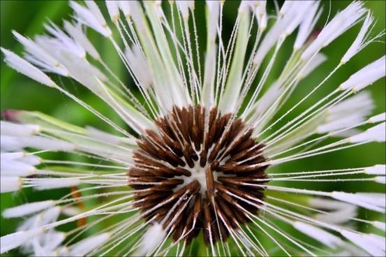 close-up seeds flower