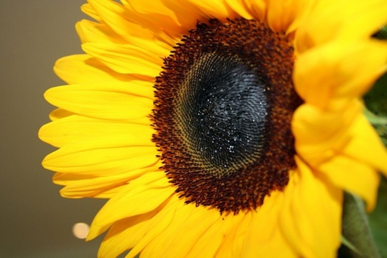 Sunflower Vase Free Stock Photos Download 367 Free Stock Photos