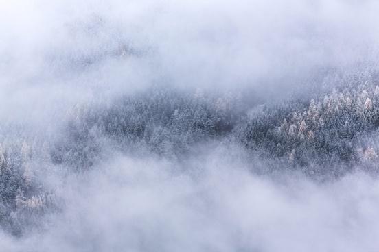 cloud cold fog forest haze landscape mist misty