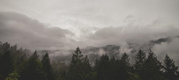 cloud fog foggy forest haze landscape light mist