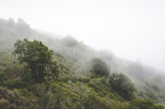 cloud fog forest haze hiking hill landscape mist