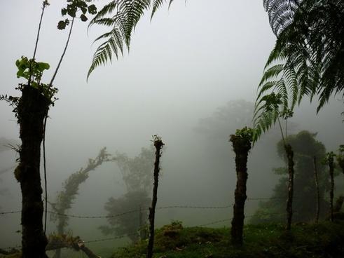 cloud forest farm