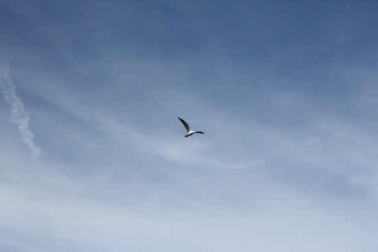 clouds ocean seagull