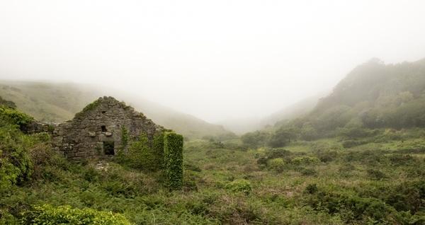 cloudy fog forest grass haze hill landscape mist