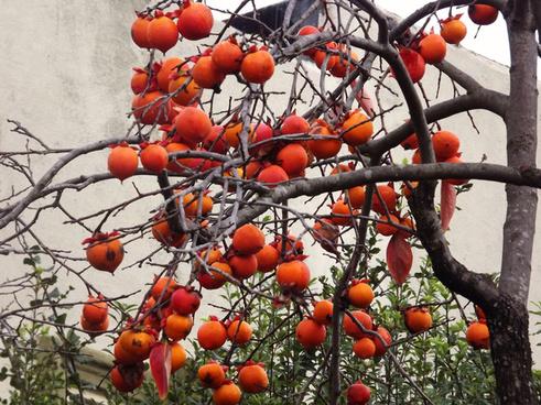 cluster orange