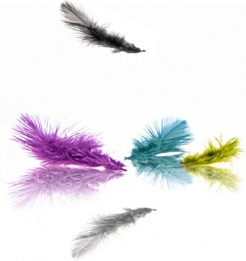 cmyk color feathers highdefinition picture