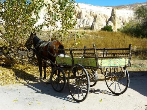 coach horse-drawn carriage horse
