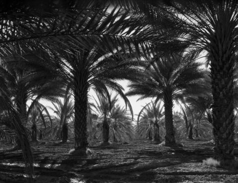 coachella valley california 1940s