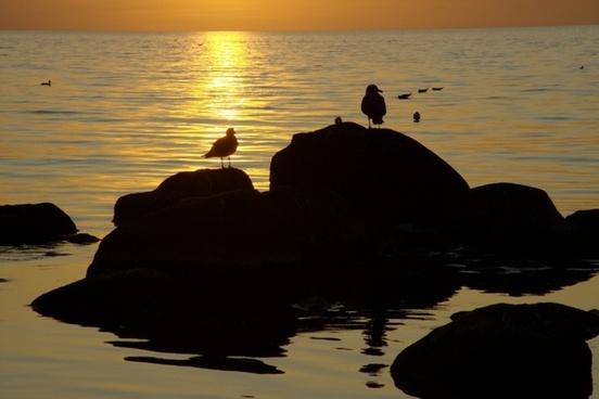 coast sea gulls