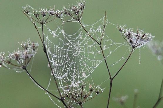 cobweb dew nature