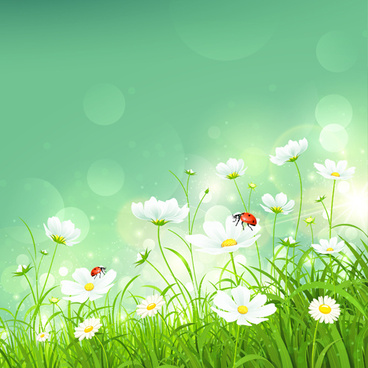 coccinella and white flower shiny background vector